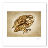 Prints : Screech Owl #2, 11X14 Unframed