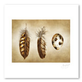 Prints : Quail Feathers and Egg, 11X14 Unframed