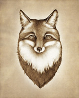 Prints : Fox Portrait, 8X10 Unframed