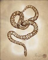 Prints : Leopard Snake 8X10 Unframed