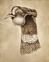Prints : Pheasant Head 8X10 Unframed