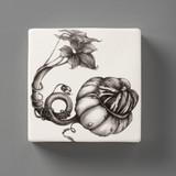 Wall Box: Turk Gourd