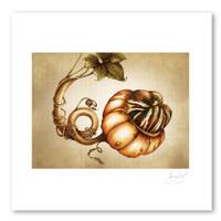 Prints : Turk Gourd, 11X14 Unframed