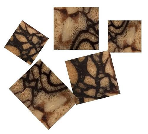 Tiger Coral Pre-Cut Inlay Squares