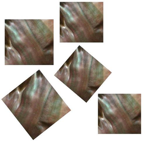Blacklip Pre-Cut Inlay Squares