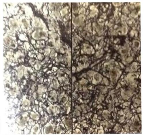 Dark Serpentine Stone Pairs 1 3/4 x 15/16 x .096