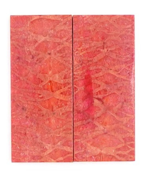 Apple Coral Pair 2 5/8 x 1 x 1/4 #3