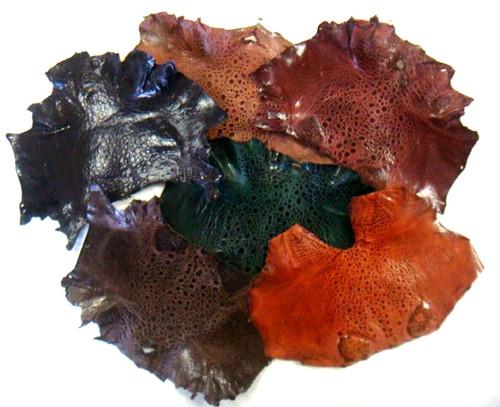 Glazed Toad Skins