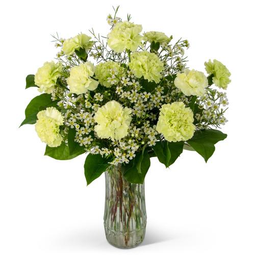 A Dozen Sweet Green Carnations