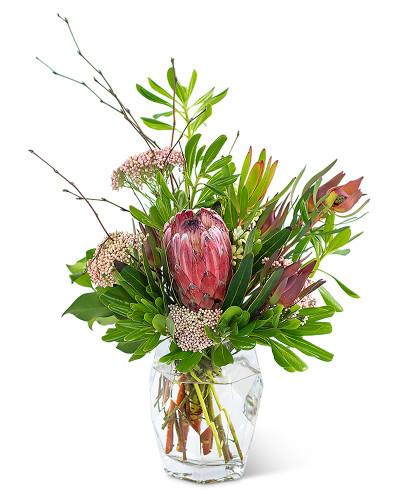 Posh Protea