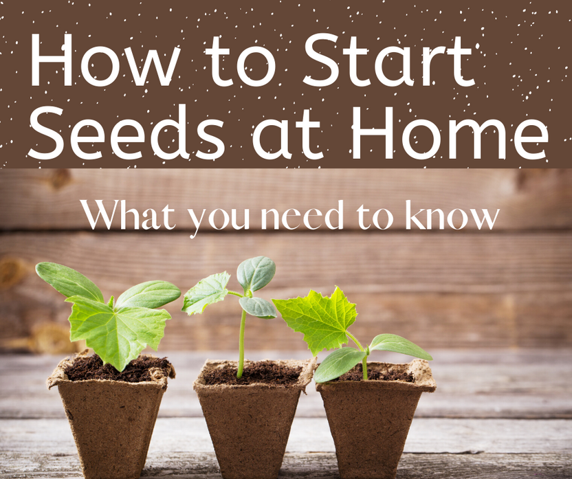 Starting Seeds At Home Beat Your Neighbor