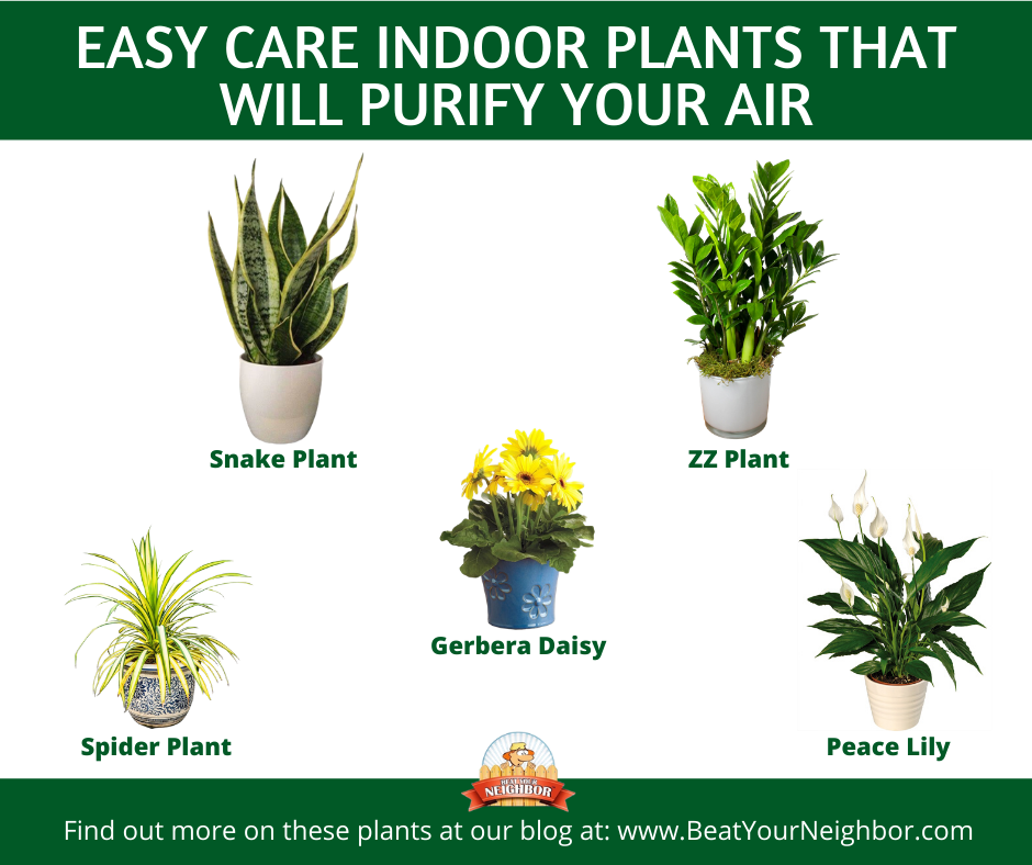 Easy Care Indoor Plants That Purify The Air Beat Your Neighbor