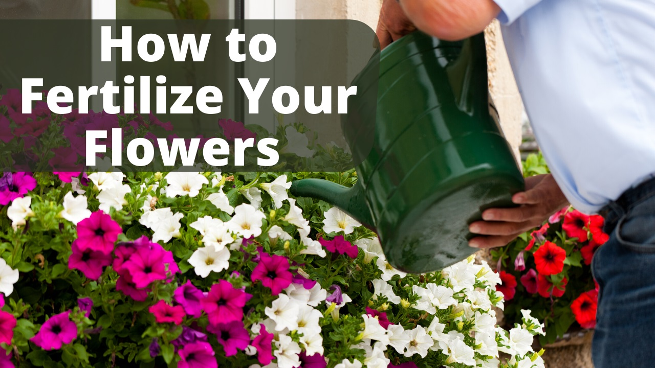 How to fertilize your garden plants and flowers.