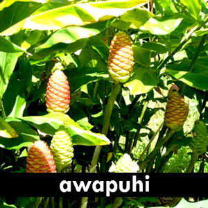 Awapuhi