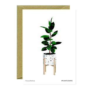Ficus #plantlovers