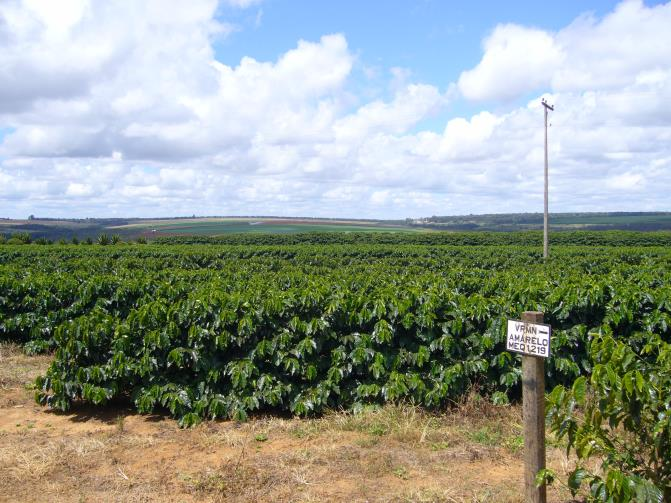 Coffee Farmland in Brazil