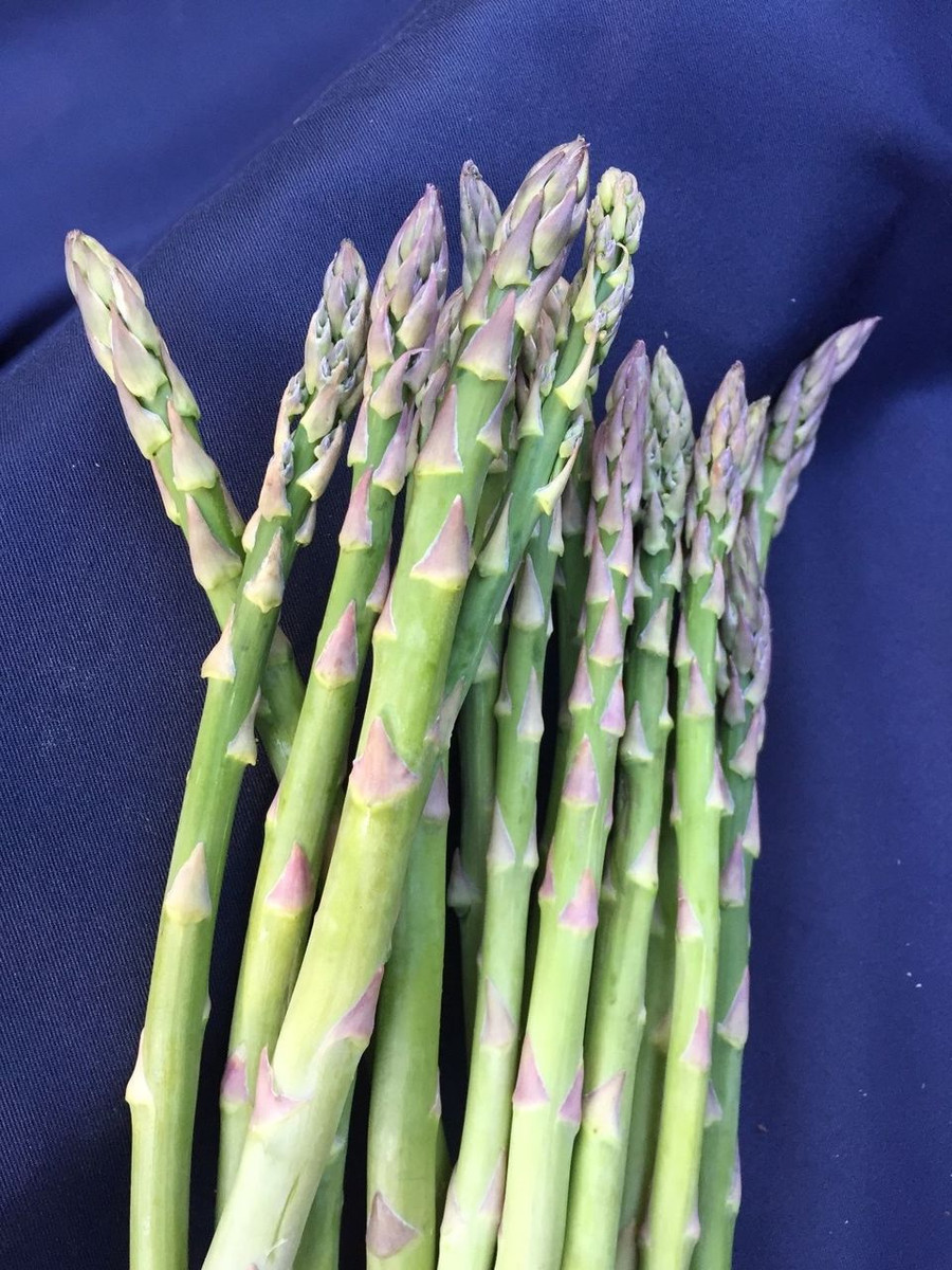 Asparagus Jersey Supreme, Male, 10 Two year old crowns