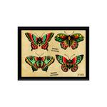 Butterflies -Shawzy