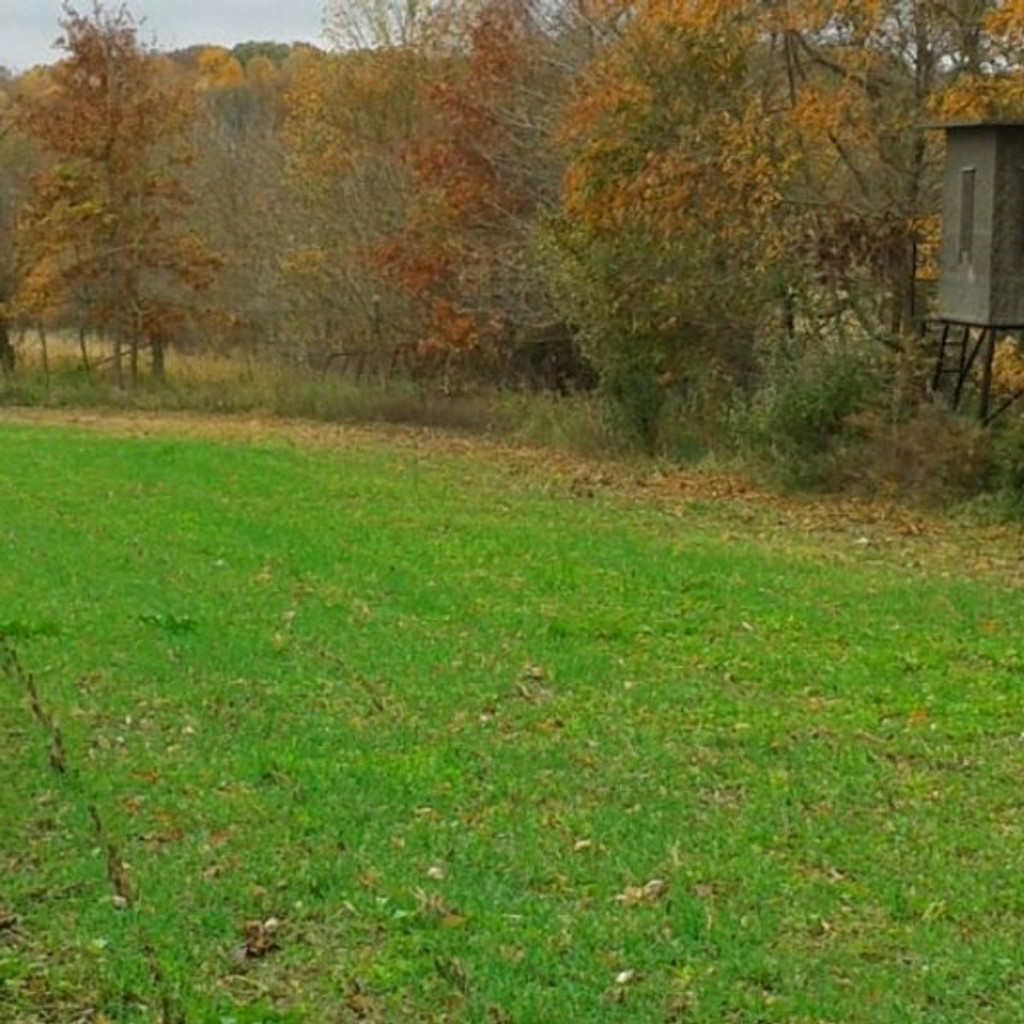 Real World Forage Oats - 50 lbs.