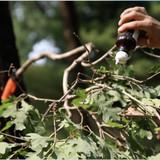Hodag Licking Branch System