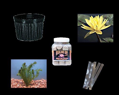 Medium Pond - Plant Collection