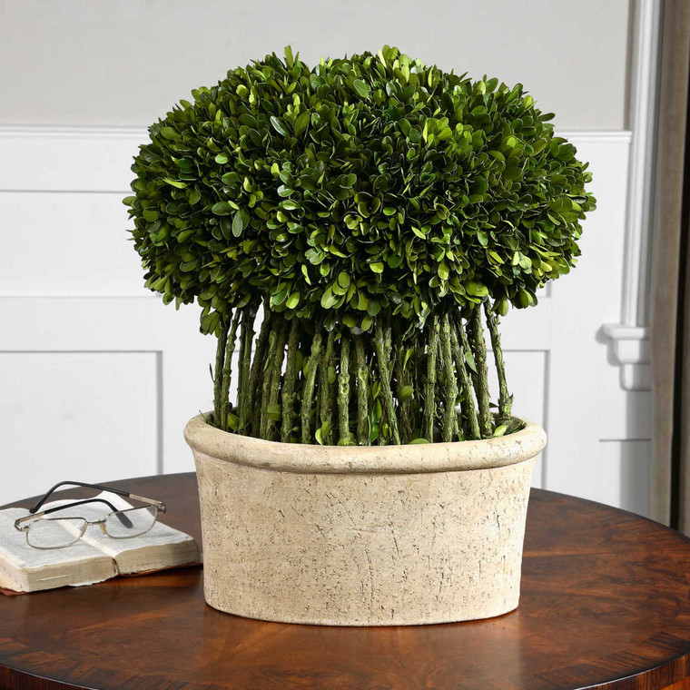 Uttermost Willow Topiary Preserved Boxwood 60108