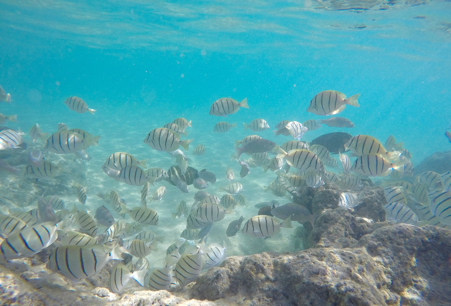 Snorkeling Spots in Hawaii