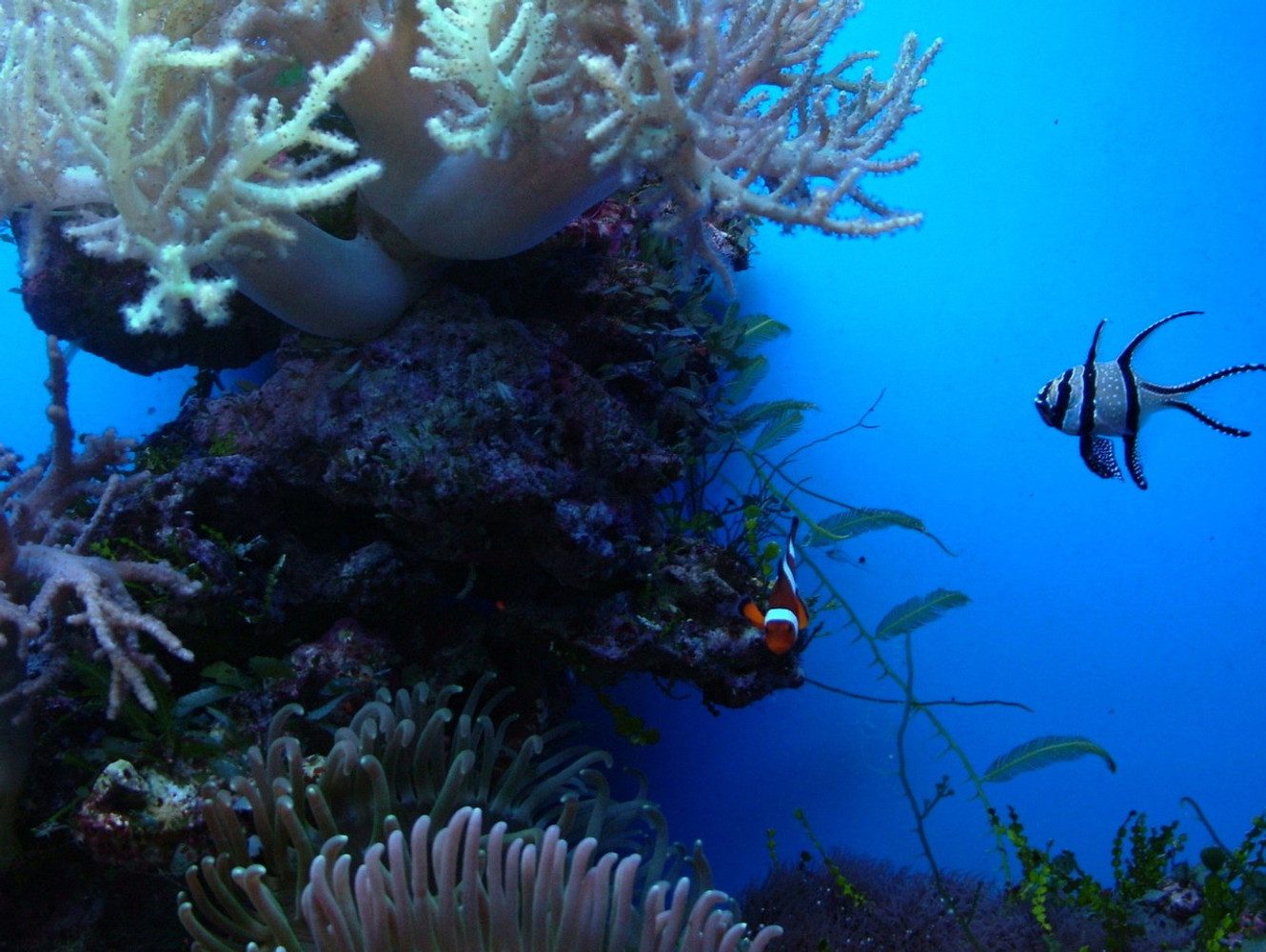 Snorkeling Etiquette: Protect Yourself and Marine Wildlife