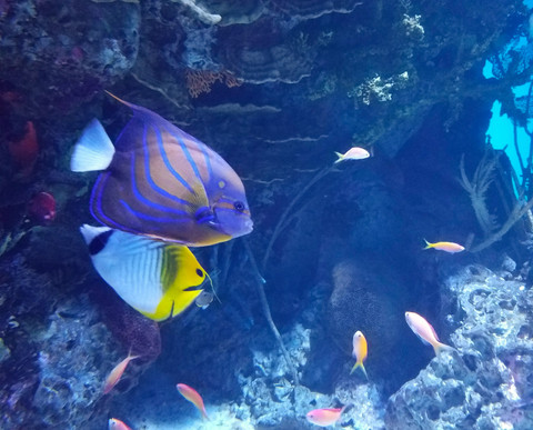 Does Snorkeling Equipment Color Affect Aquatic Life?