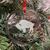 Buffalo Coordinates Ornament