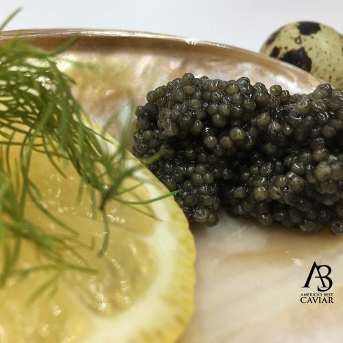 Paddlefish (4 ounce)