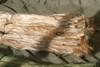 MOSS Jute HAIR (ghillie suit garnish)