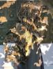 Textured Ghillie Leaf