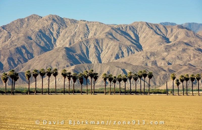 (f)   My Coachella Dates