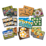 Honey Bee Early Number Cards, Set of 16