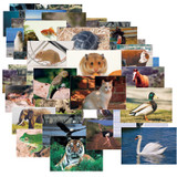 """Animals & Insects Posters Mega Set, 14"""" x 19"""", Set of 48"""