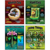 Life Science Teaching Posters, Set of 4