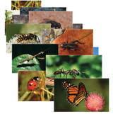 Insects & Bugs Real Life Learning Poster Card Set, Set of 14