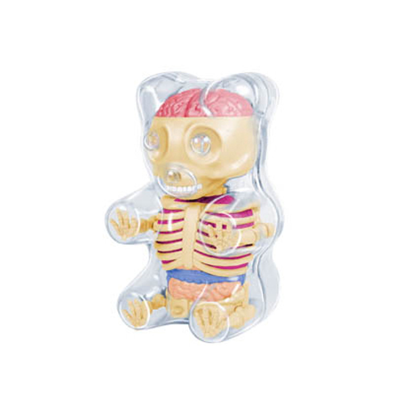 Mini Gummi Bear Anatomy : Clear