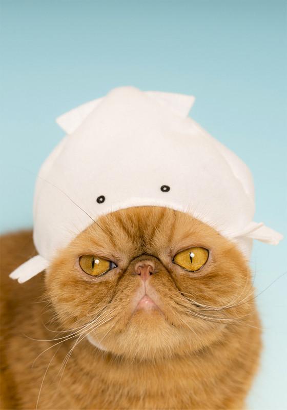 Cat Cap Aquarium : Blind Box