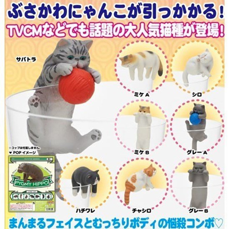 Putitto Exotic Shorthair Cat on the Cup : Blind Box