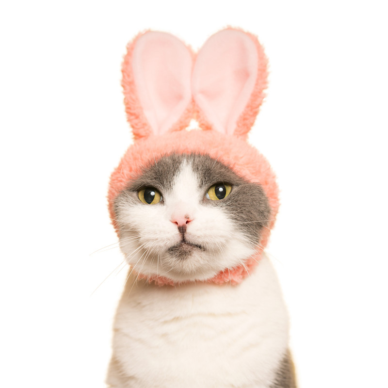 Cat Cap Rabbit : Blind Box