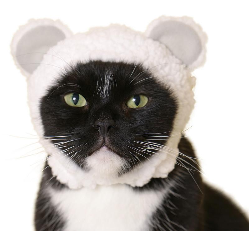 Cat Cap Bear  : Blind Box