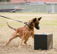 K-9 BSD Reward Scent Box