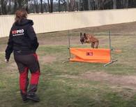 Klin IGP Dog Jump