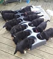 Weanafeeda Puppy Feeding System