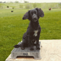 Cato Outdoor Training Boards