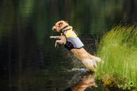 Pro Life Vest by EQ DOG