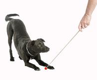 Company of Animals Target Stick