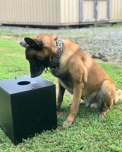 K-9 BSD Reward Scent Box